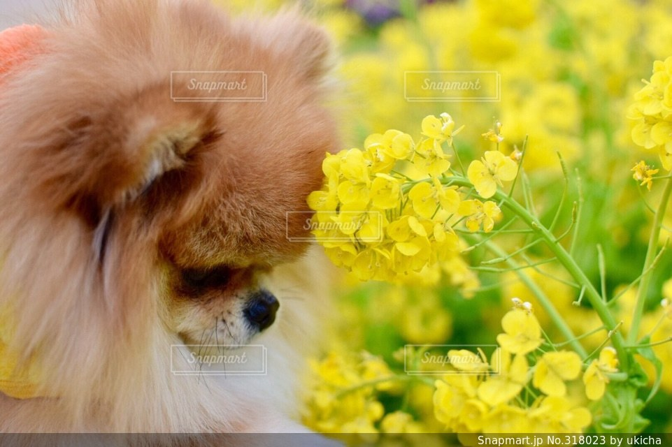 犬の写真・画像素材[318023]