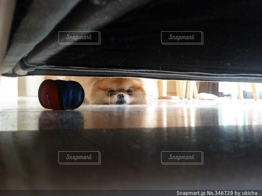 犬の写真・画像素材[346729]