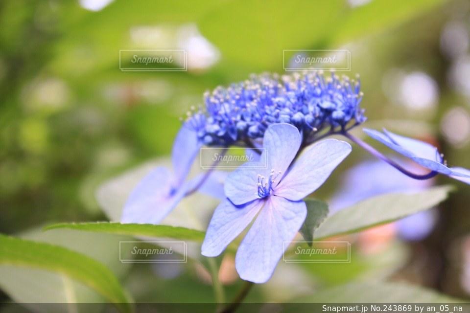 自然の写真・画像素材[243869]