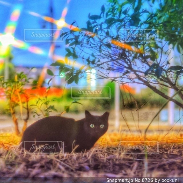 猫の写真・画像素材[8726]