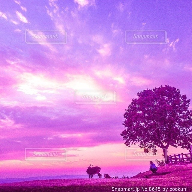 自然の写真・画像素材[8645]