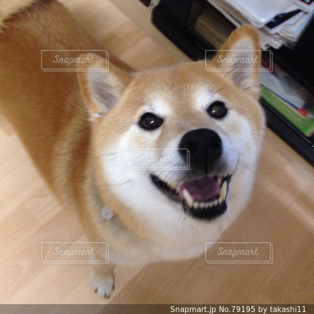 No.79195 犬
