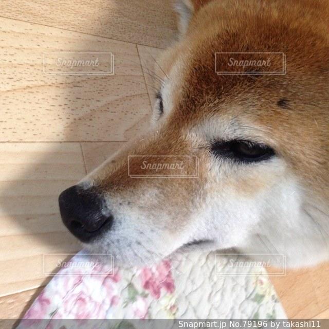 犬 - No.79196