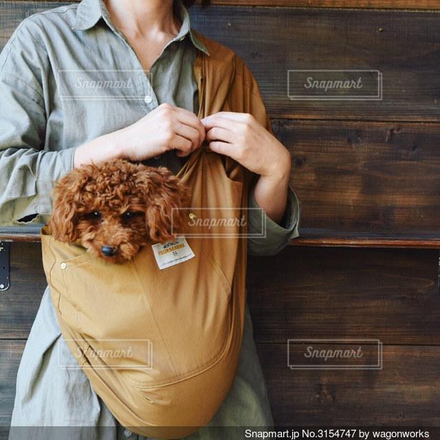 トイプードルを抱っこしている人の写真・画像素材[3154747]