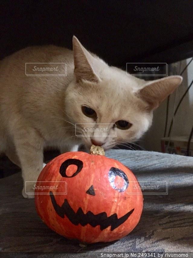 猫の写真・画像素材[249341]