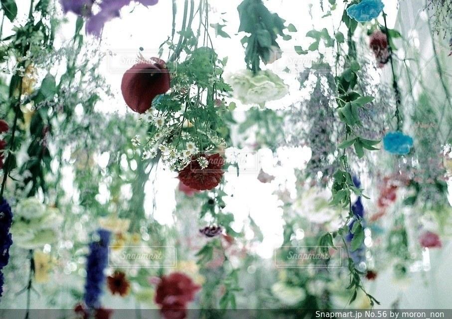 近くの花のアップの写真・画像素材[56]