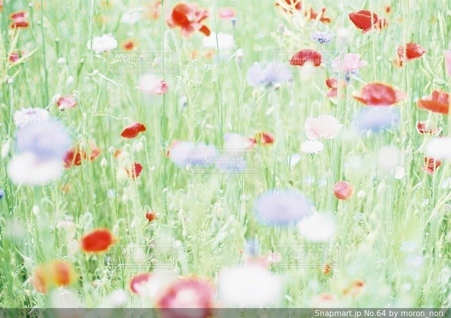 近くにいくつかの草のアップの写真・画像素材[64]