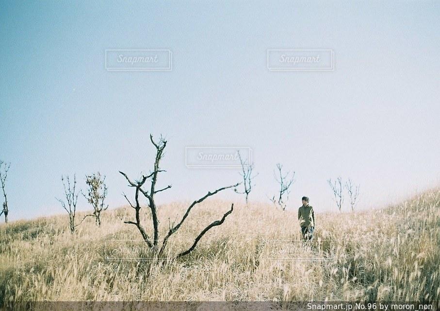 乾燥草原を横切ってシマウマの群れ - No.96