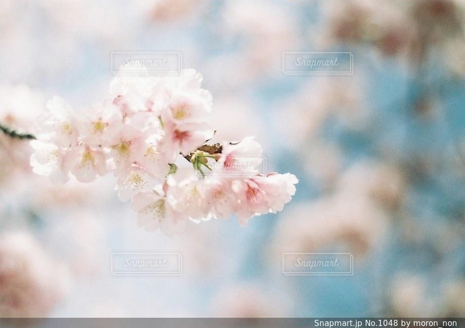近くの花のアップの写真・画像素材[1048]