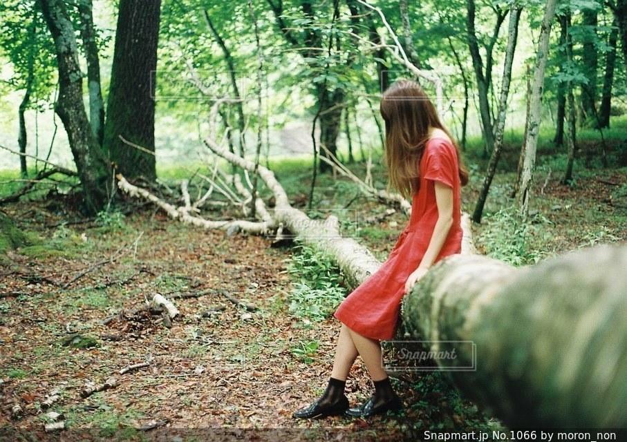 森の中の人 - No.1066
