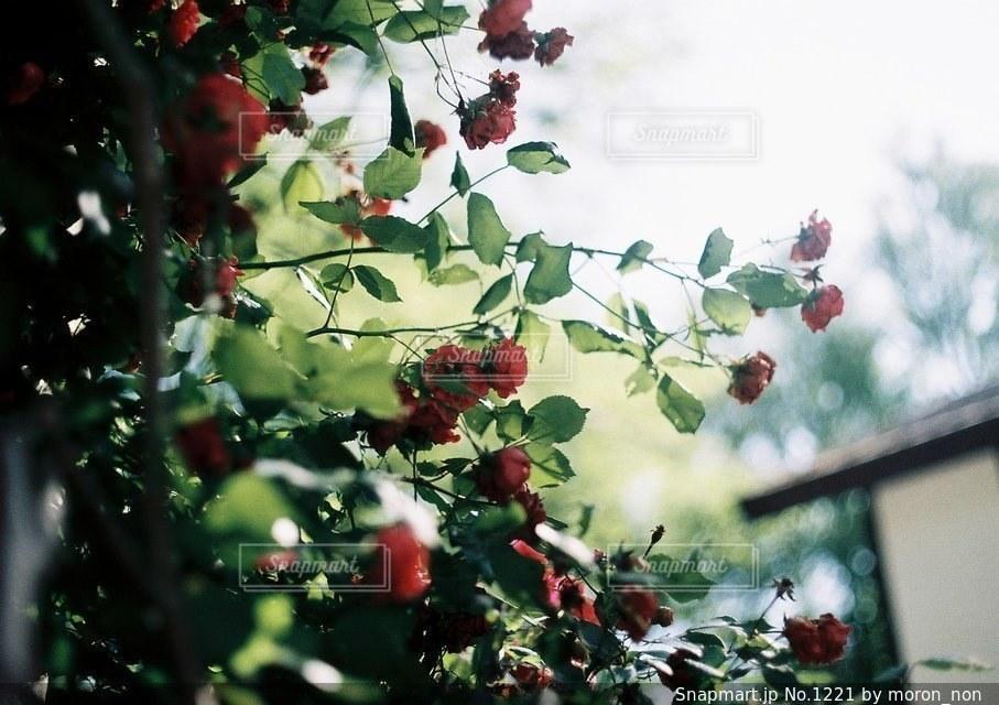 近くの花のアップ - No.1221