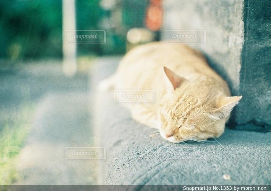 地面に横になっている猫の写真・画像素材[1353]