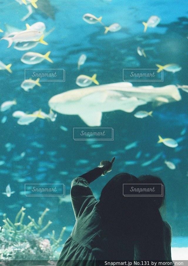 水中で泳いでいる人の写真・画像素材[131]