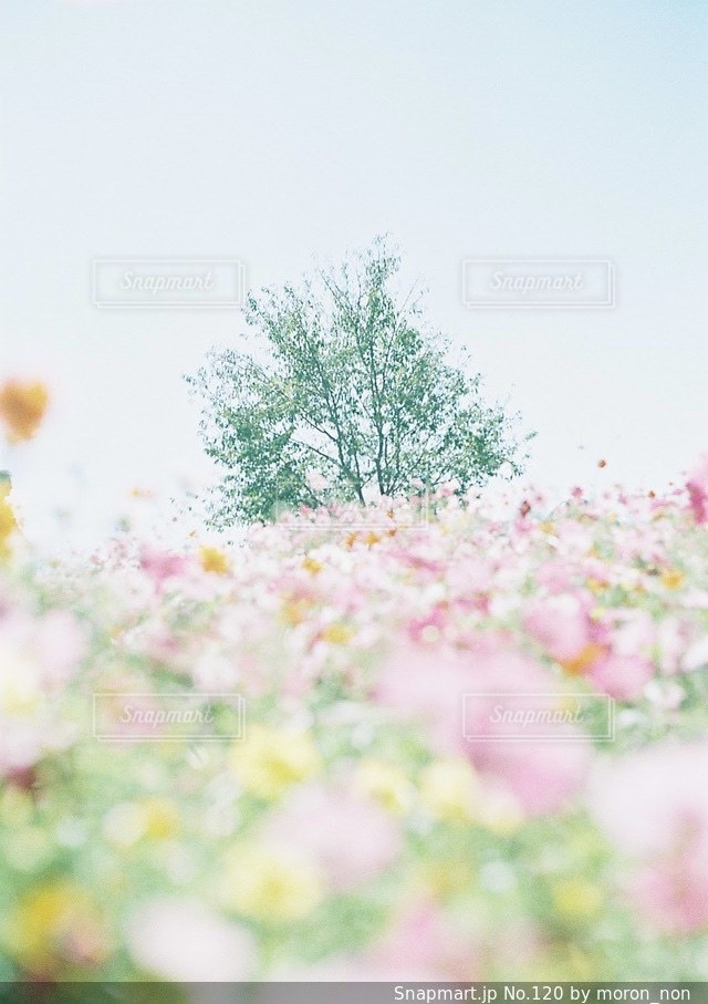花のぼやけた画像の写真・画像素材[120]