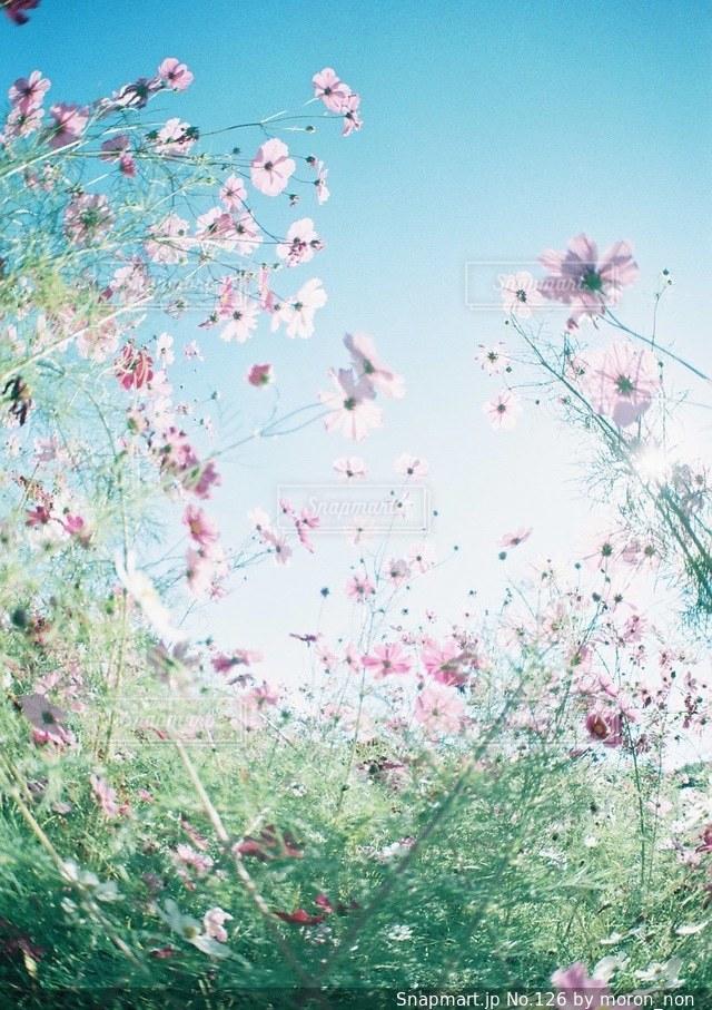 澄んだ青い空の写真・画像素材[126]