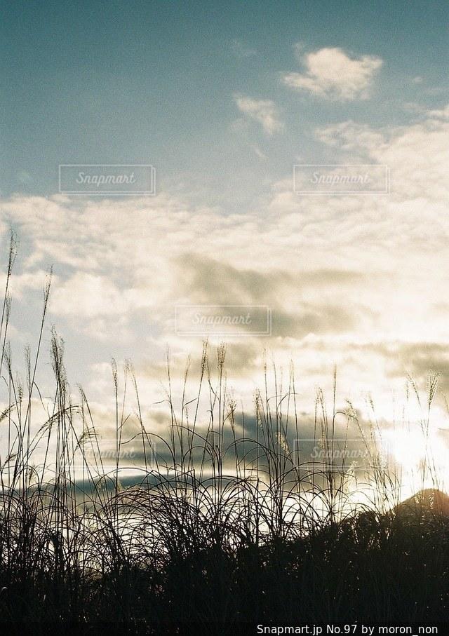 草のフィールドの写真・画像素材[97]