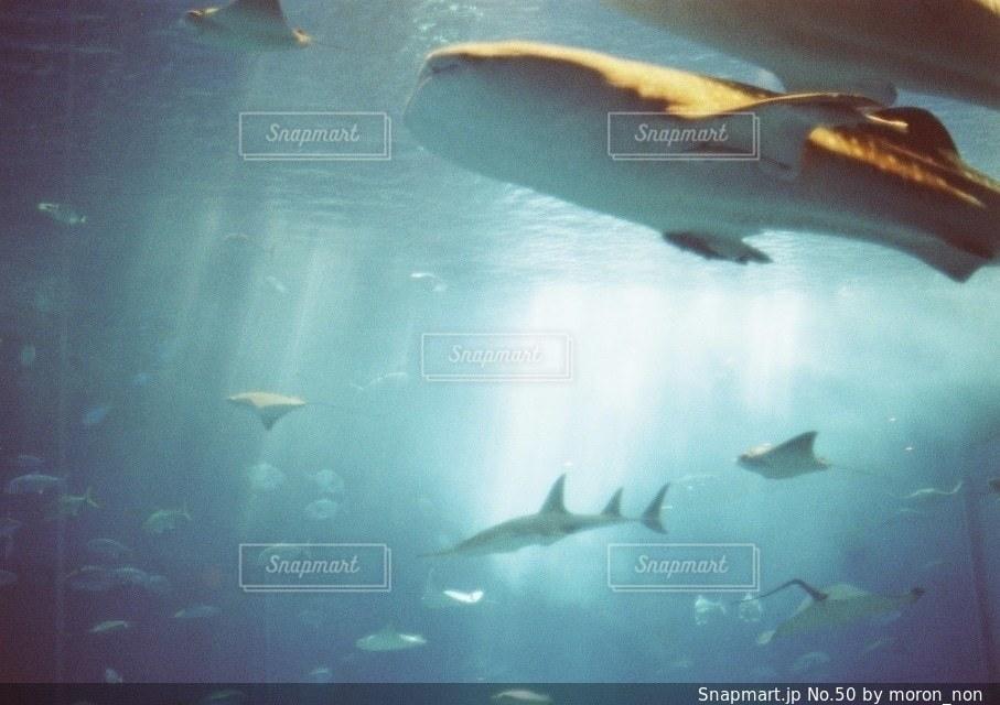 水面下を泳ぐ魚たちの写真・画像素材[50]