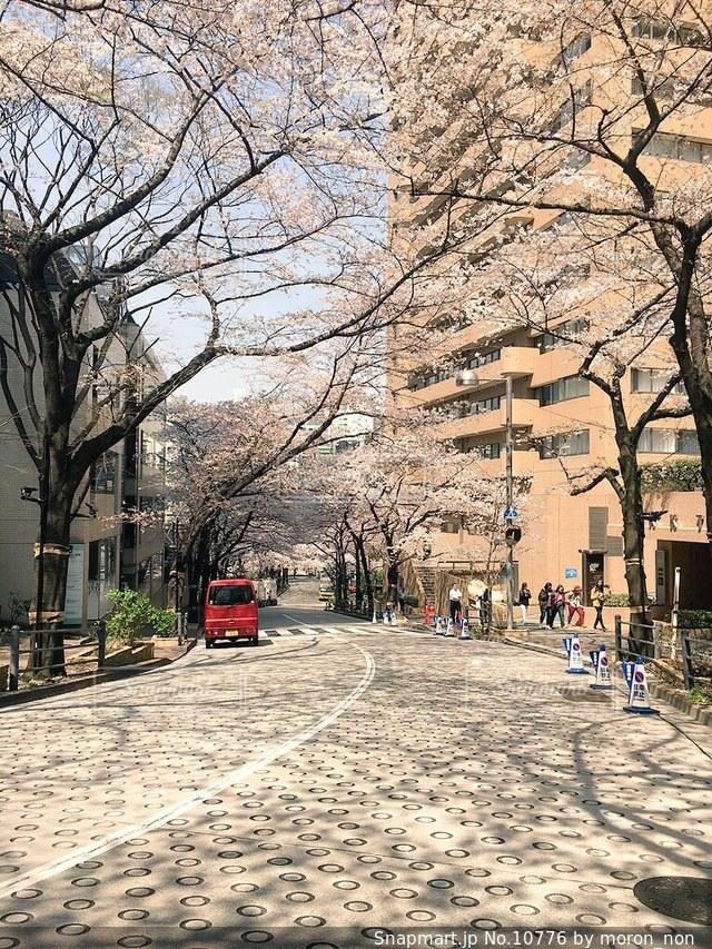 春の写真・画像素材[10776]