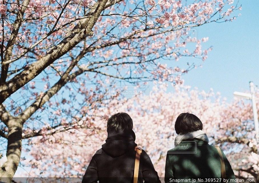 春の写真・画像素材[369527]