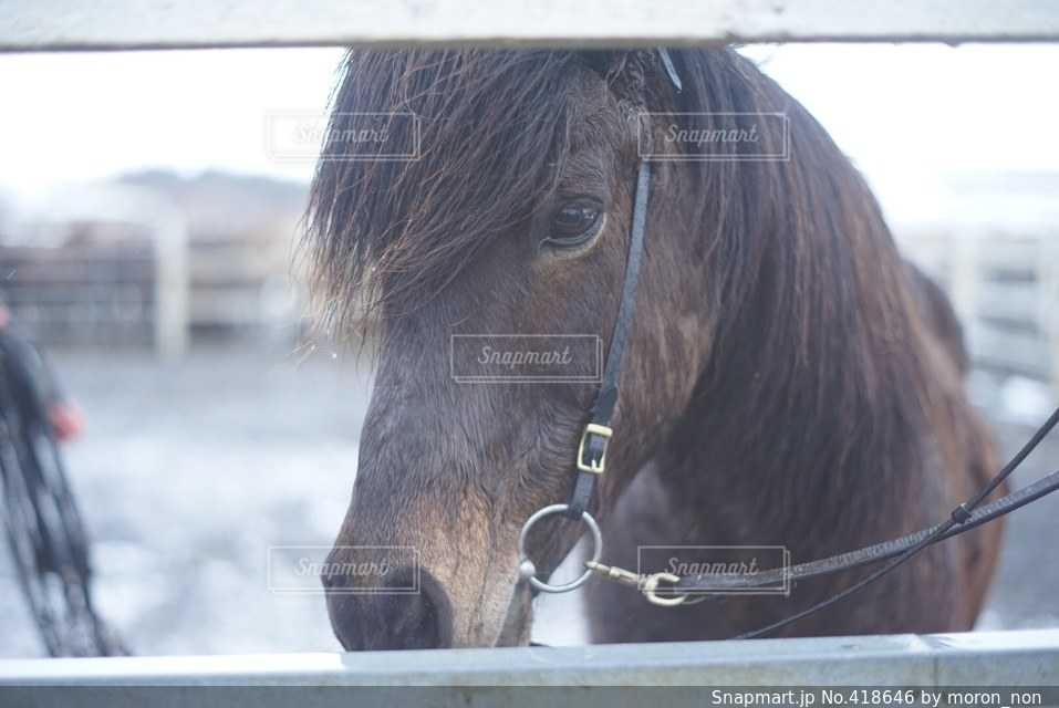 動物の写真・画像素材[418646]