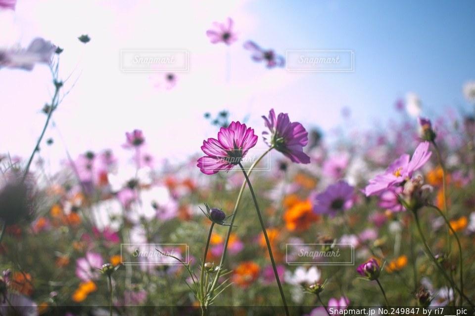 自然の写真・画像素材[249847]