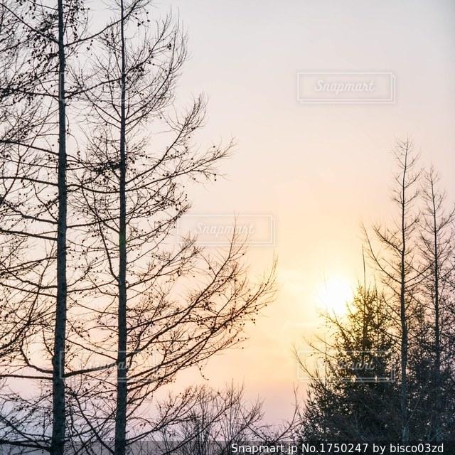 雪に覆われた木の写真・画像素材[1750247]