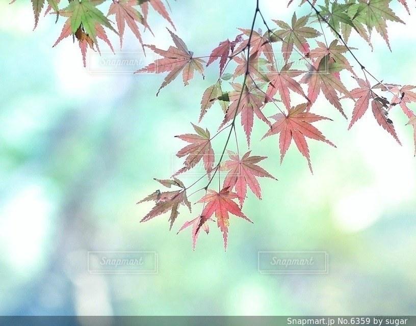 自然の写真・画像素材[6359]