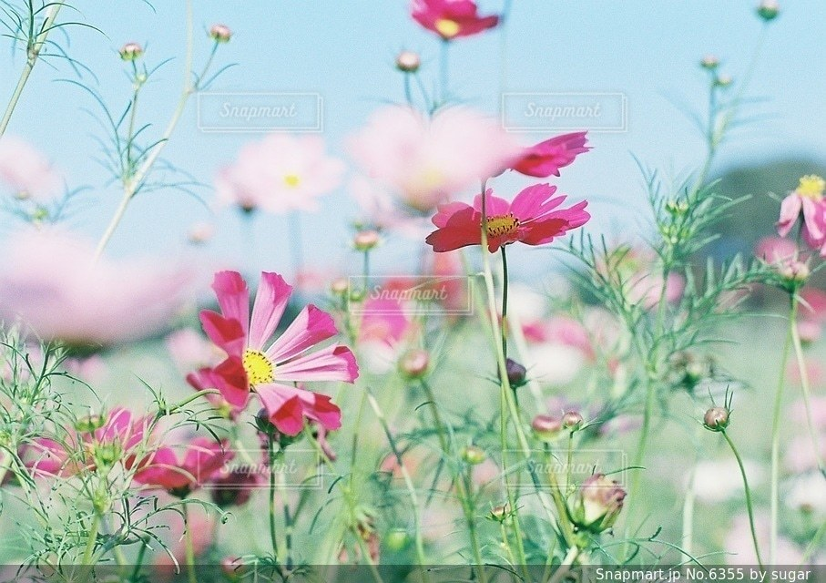自然の写真・画像素材[6355]