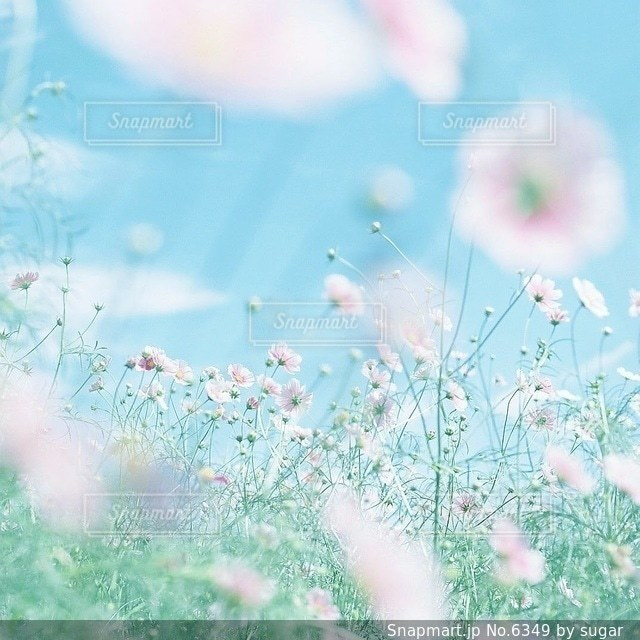 自然の写真・画像素材[6349]