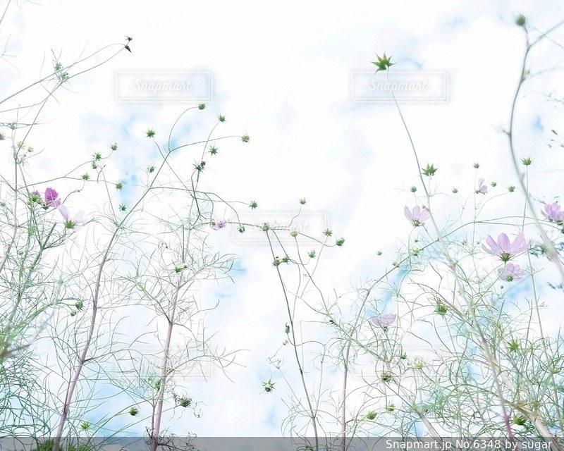 自然の写真・画像素材[6348]