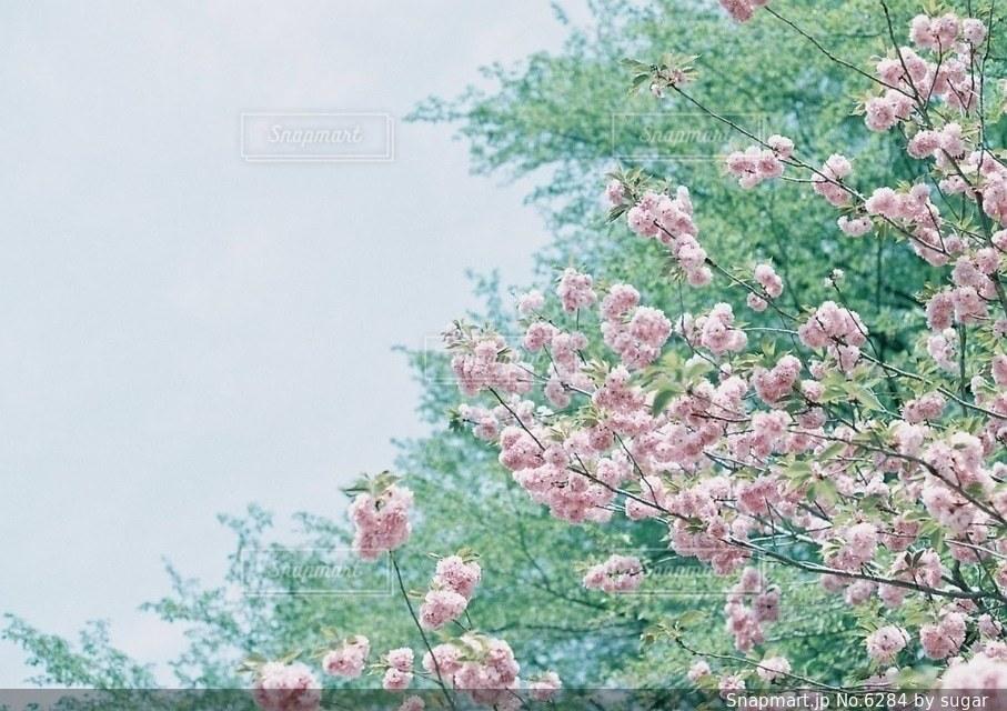 自然の写真・画像素材[6284]