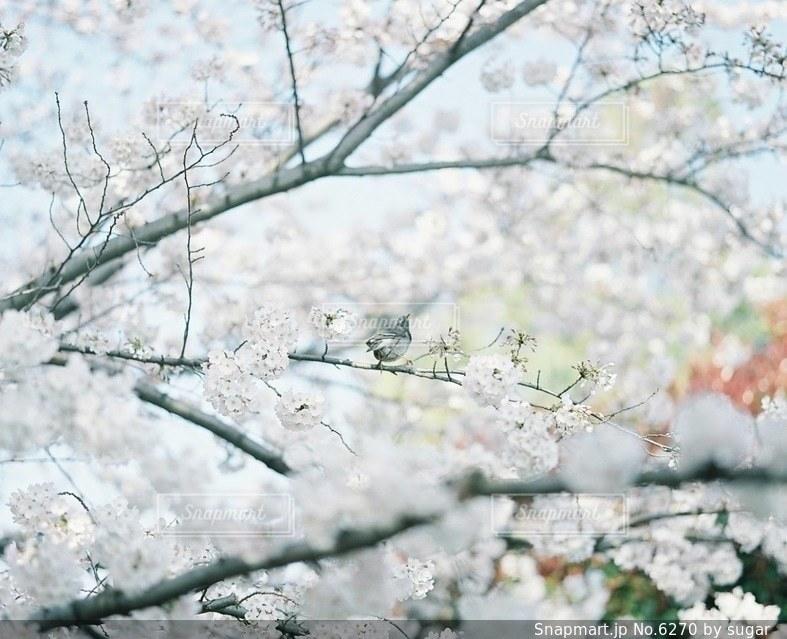 自然の写真・画像素材[6270]