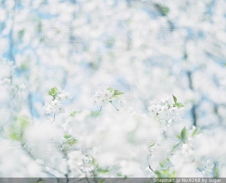 自然の写真・画像素材[6268]