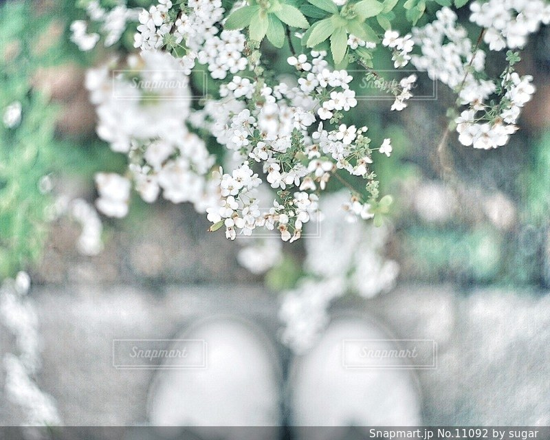 自然の写真・画像素材[11092]