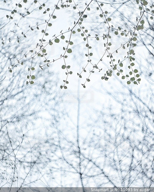 自然の写真・画像素材[11093]