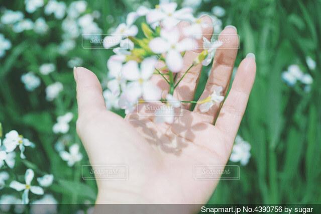 花を持つ手の写真・画像素材[4390756]