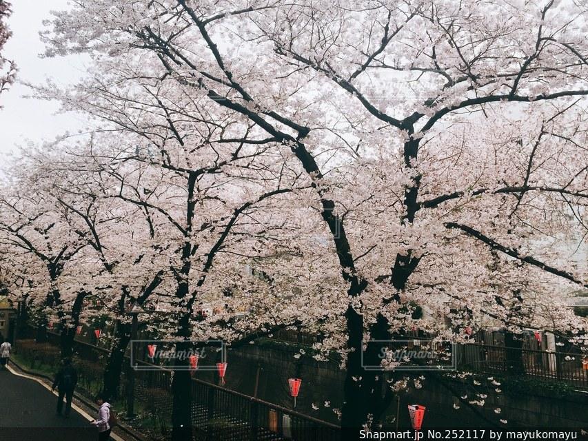風景 - No.252117