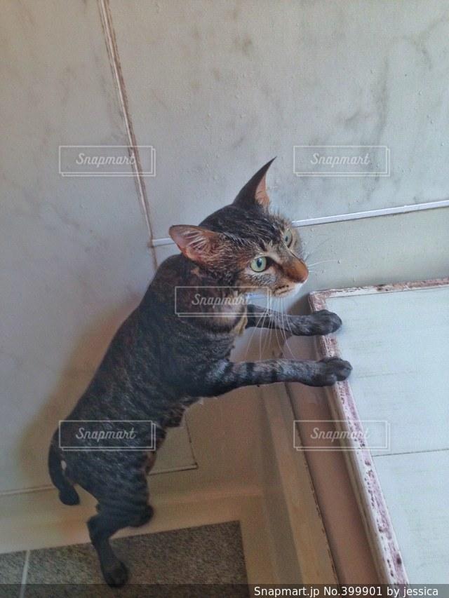猫 - No.399901