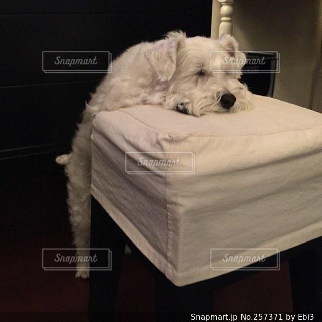 犬の写真・画像素材[257371]