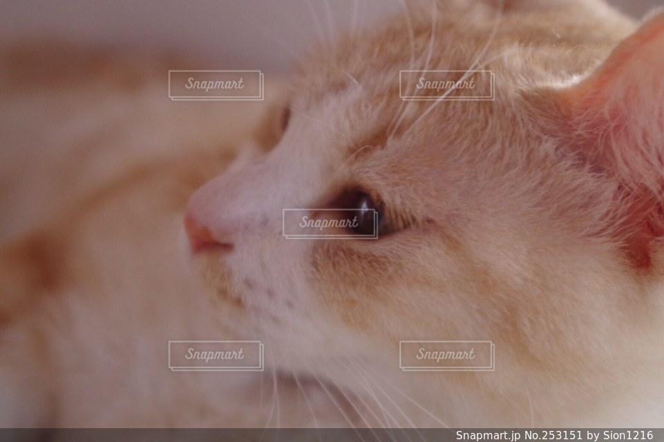 猫の写真・画像素材[253151]