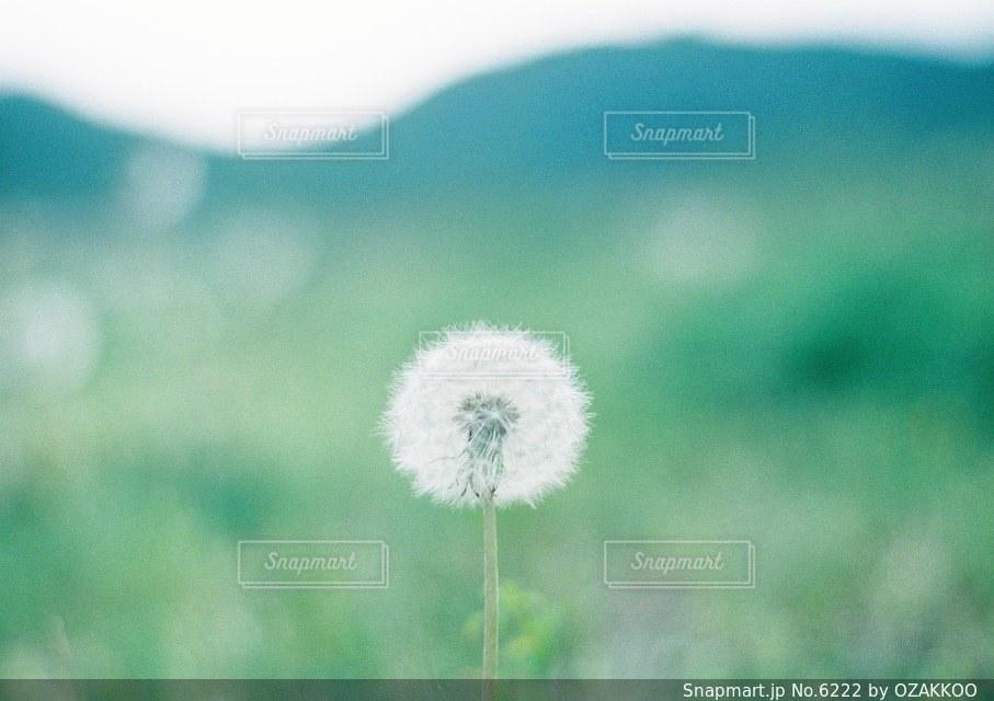 自然の写真・画像素材[6222]