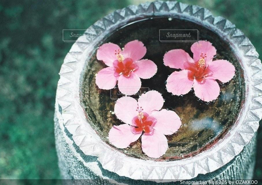 ピンクの写真・画像素材[6205]
