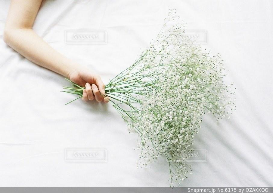 花の写真・画像素材[6175]