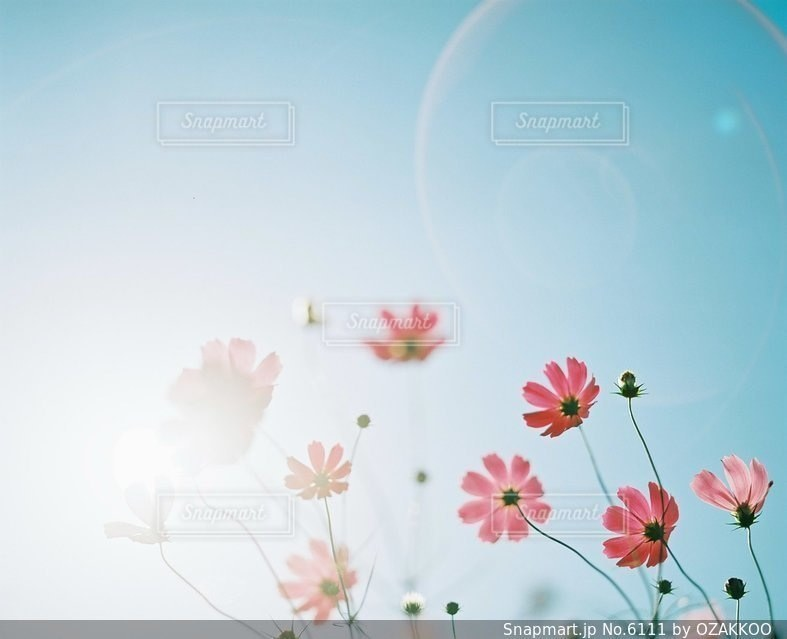 自然の写真・画像素材[6111]