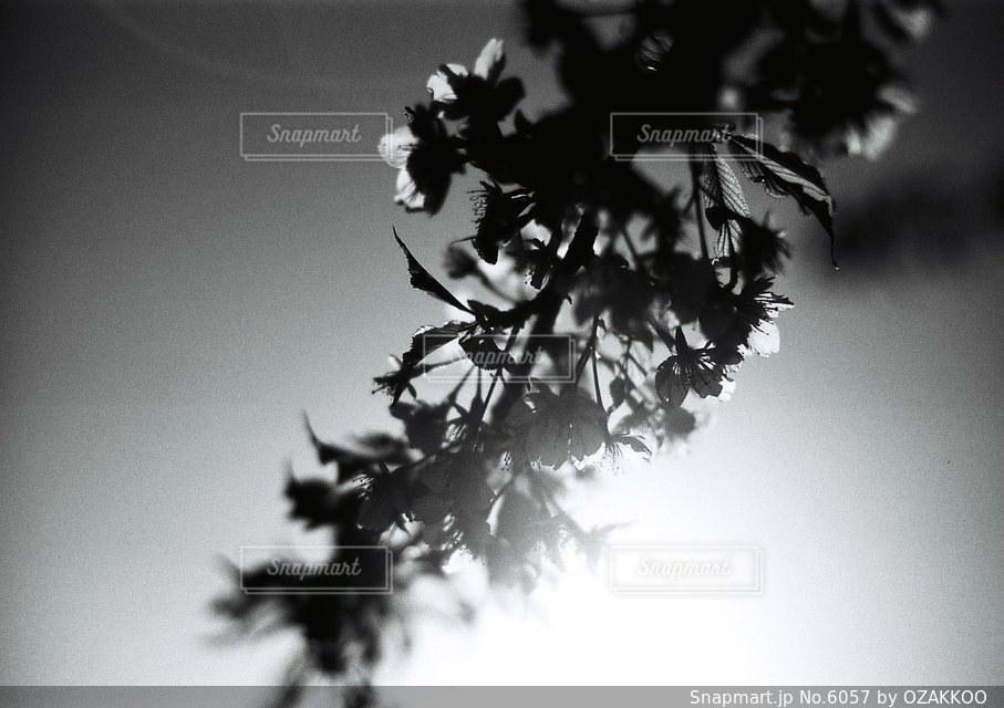 花の写真・画像素材[6057]