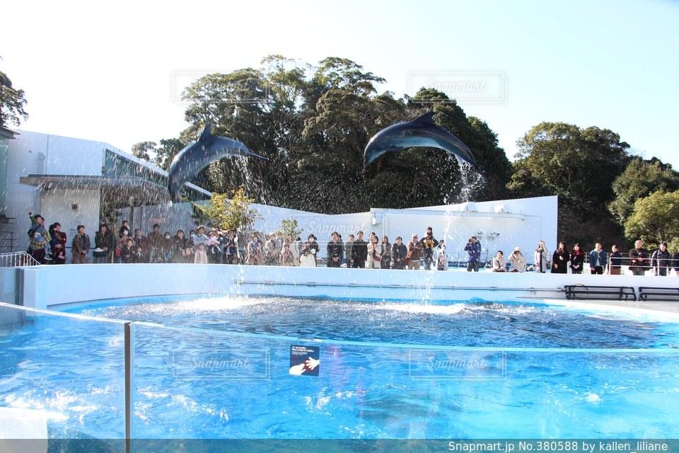 イルカの写真・画像素材[380588]