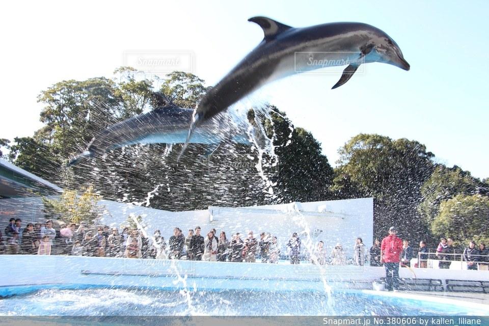 イルカの写真・画像素材[380606]