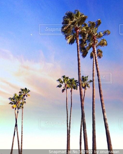 夏の写真・画像素材[562902]