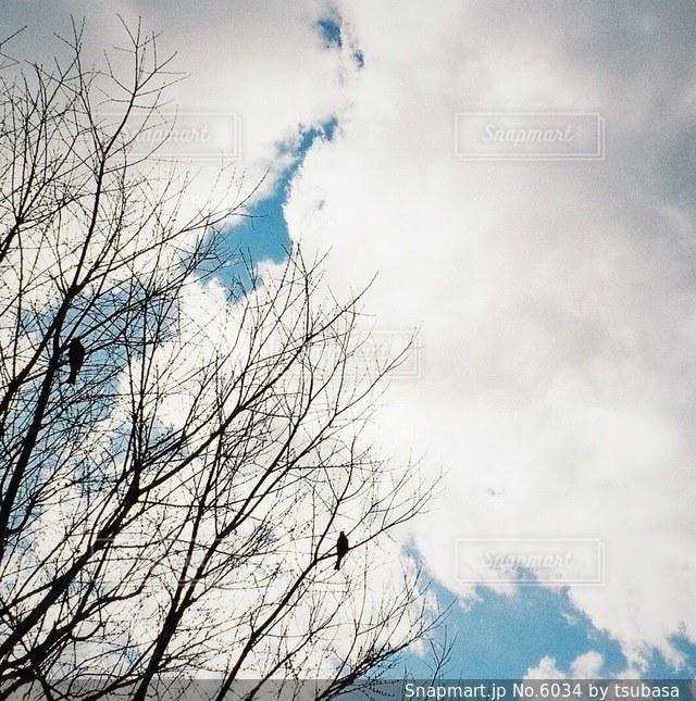 風景の写真・画像素材[6034]