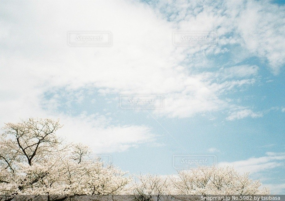 自然の写真・画像素材[5982]
